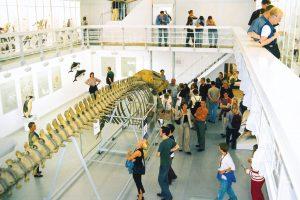 Im Zoologischen Garten findet ihr ein Blauwal-Skelett. Foto: Kiel-Marketing