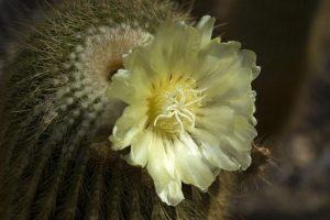 Der Botanische Garten fasziniert mit seinen Pflanzen. Foto: Kiel-Marketing