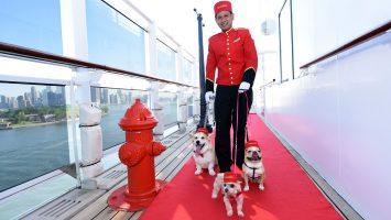 Kreuzfahrt und Hund? Klar, denn Cunard und weitere Anbieter bieten an das eigene Haustier mit an Bord zu nehmen. Foto: Cunard/Diane Bondareff/AP Images for Cunard