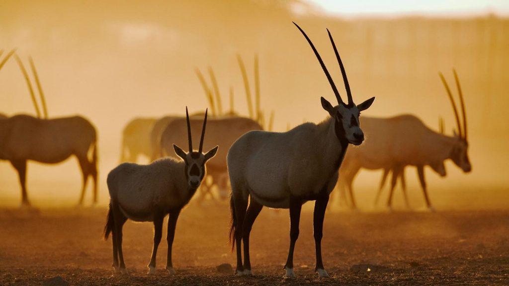 Seltene Tiere und unvollstellbare Natur erwarten euch auf der Insel. Foto: MSC Krezfahrten