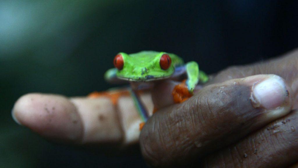 Kleine Tiere, große Wirkung. Wundervolle Natur in Mittelamerika. Foto: André Lenthe