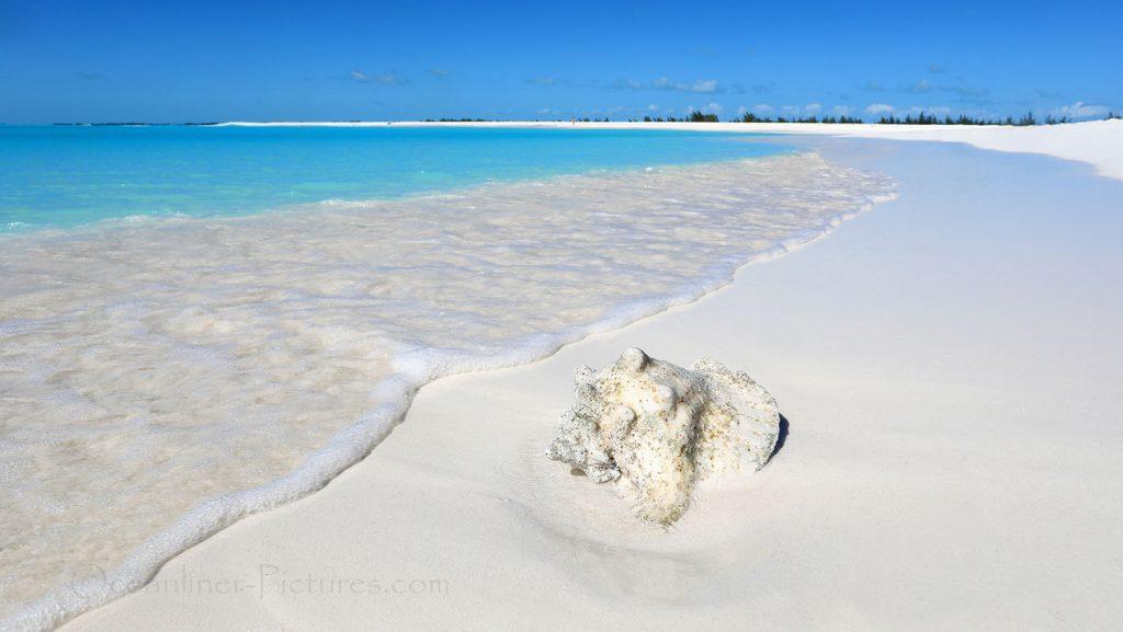 Conch Muschel Cayo Largo, Kuba. / Foto: Oliver Asmussen/oceanliner-pictures.com
