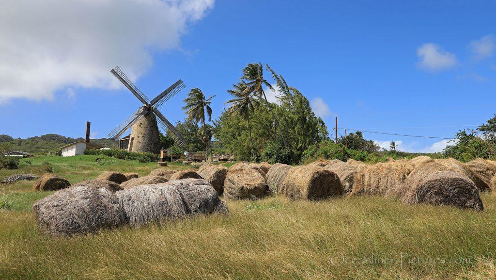Morgan Lewis Sugar Mill, Barbados. / Foto: Oliver Asmussen/oceanliner-pictures.com