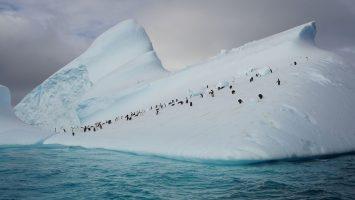 nicko cruises bietet gemeinsam mit Quark Expeditions Kreuzfahrten in die Antarktis. Foto: nicko cruises