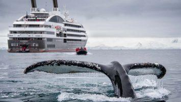 Atemberaubend schön - Expeditionskreuzfahrten. Die Le Boréal mit einen Wal. Foto: Ponant/Lorraine Turci