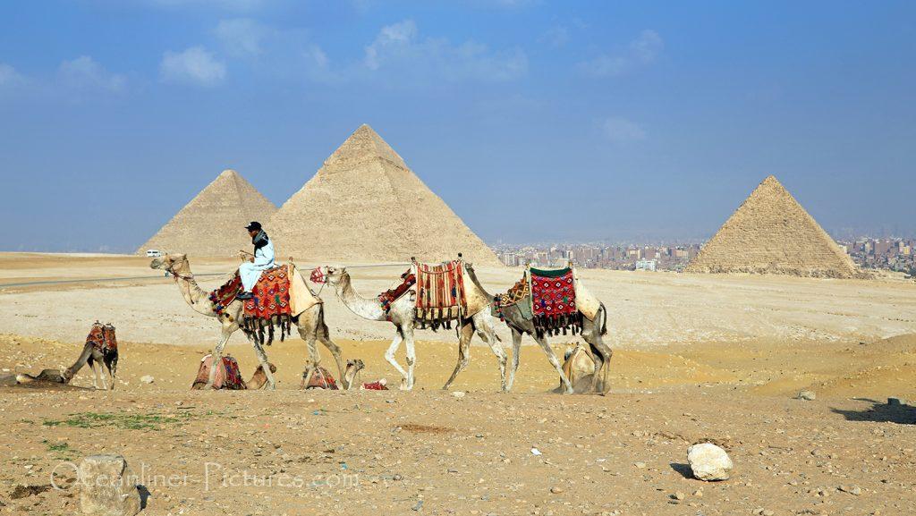 Kamele vor Gizeh Pyramiden, Ägypten / Foto: Oliver Asmussen/oceanliner-pictures.com