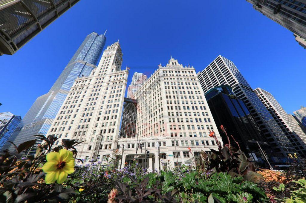 Trump Tower und Wrigley Building in Chicago / Foto: Oliver Asmussen/oceanliner-pictures.com